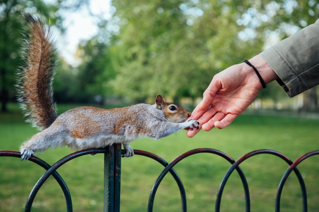 closeup shot human hand touching squirrel park MIN